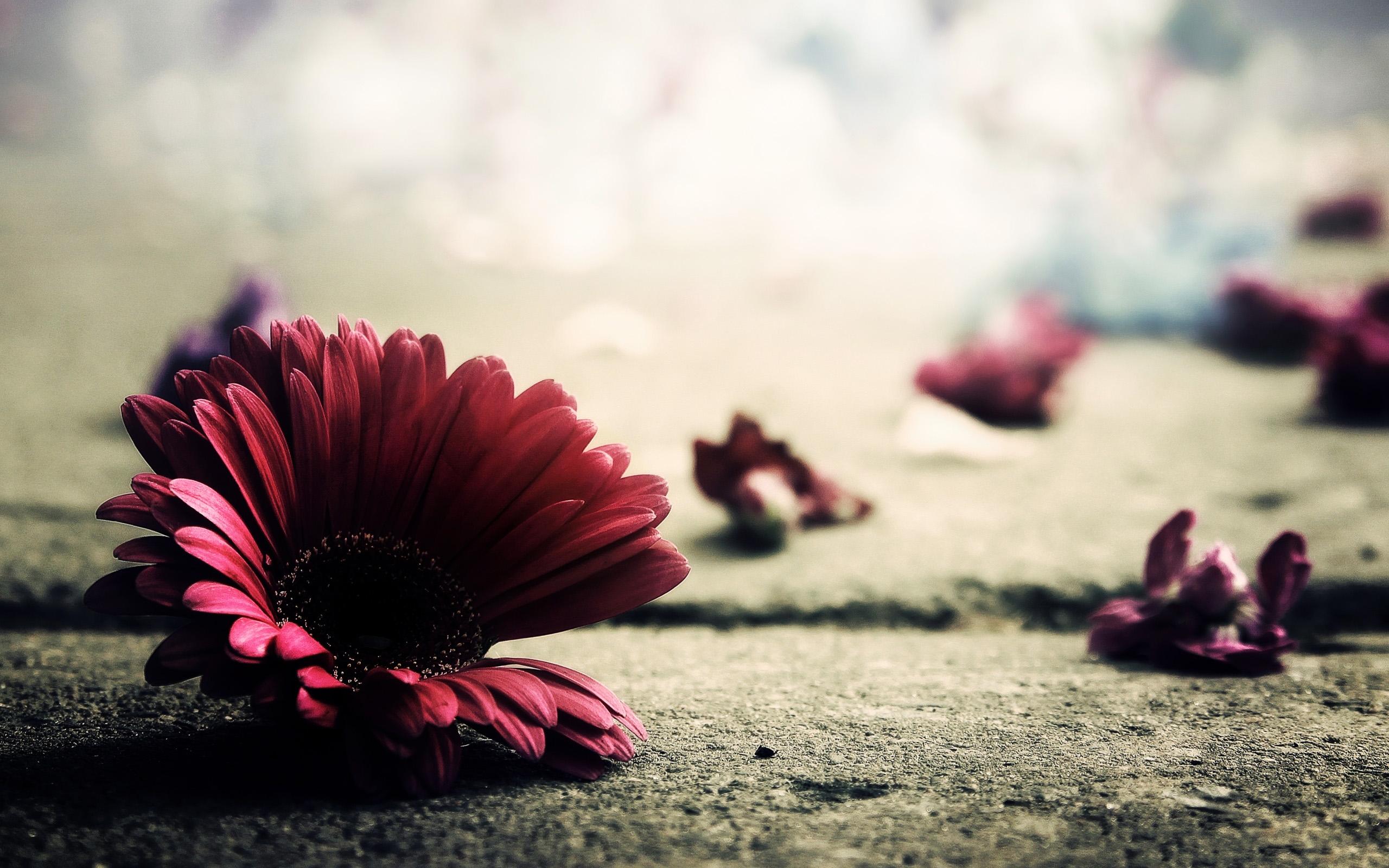 6910465-petal-fallen