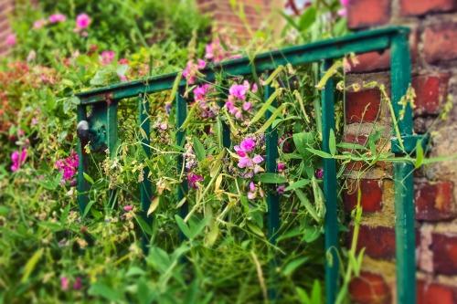garden-gate-3505533_1280