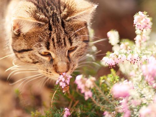 cat-1187281_1280