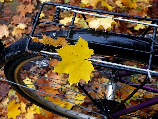 leaf-972393_640